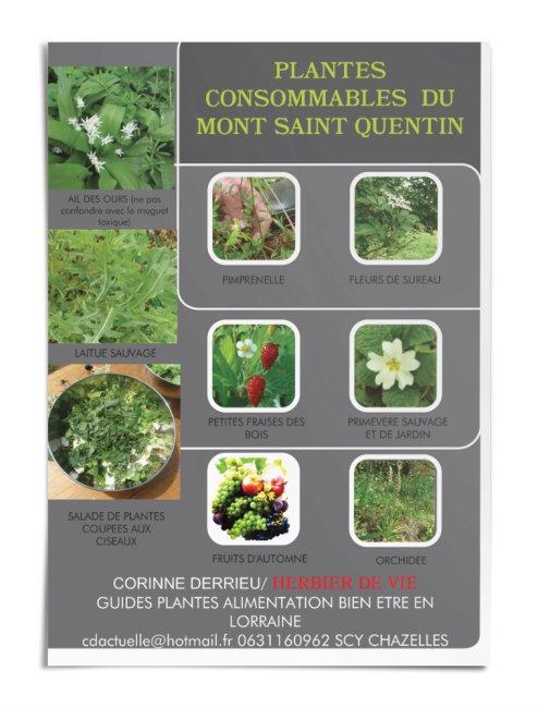 PLANTES CONSOMMABLES DU MONT SAINT QUENTIN